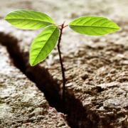 Cosa è la resilienza? Come ci può aiutare nella vita?